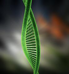 DNA G