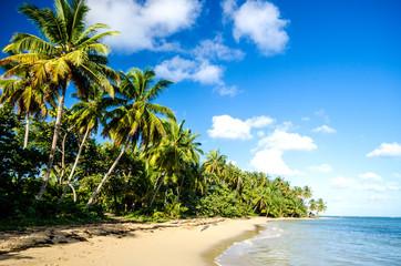 lonely caribbean beach