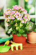 Beautiful flower in pot on wooden table on window background