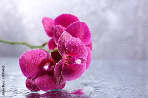 Fototapeta  Beautiful blooming orchid with water drops