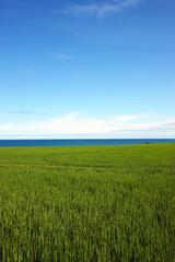 Feld Meer Himmel - Hintergrund