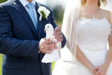 White wedding dove at groom's hands