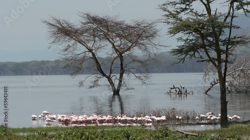 Lesser flamingos, Lake Nakuru National Park