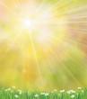 Obrazy na płótnie, fototapety, zdjęcia, fotoobrazy drukowane : Vector sunshine background  with grass and chamomiles.