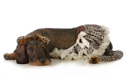 dog wearing cat costume