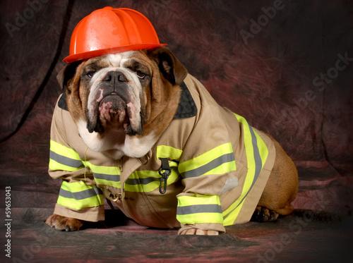 Papiers peints Porter fire dog