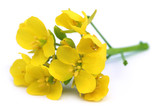 Edible mustard flowers