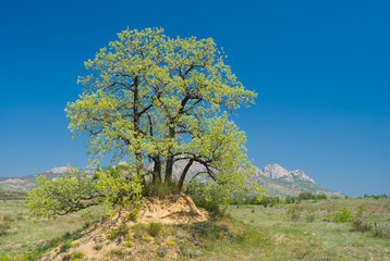 Landscape with lonely oak on a hill in Eastern Crimean mountains