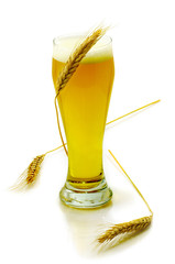 Isolated image of a glass of beer and a wheat