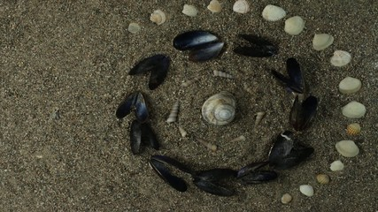 sea shell stop motion animation