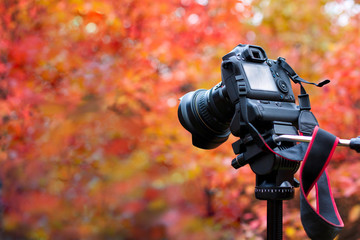 camera on autumn background