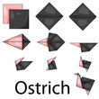 Illustrator of Ostrich origami