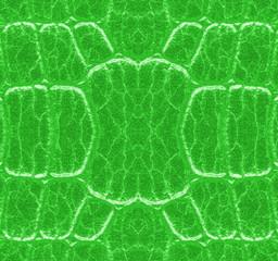 pattern of green snake skin closeup