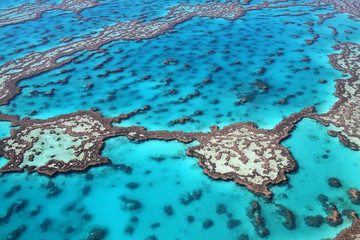 Tropical Great Barrier Reef in Australia