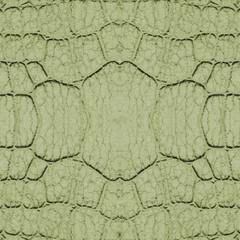 fragment of green snake skin  closeup