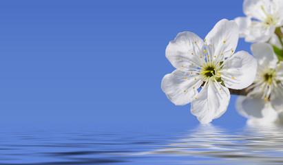 magic of blossoms