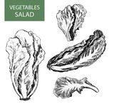 Salad - set of vector illustration