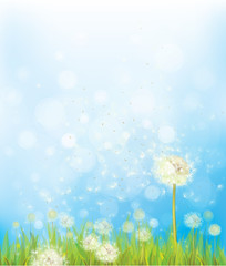 Vector nature background with dandelions.