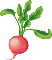 One small radish with greens