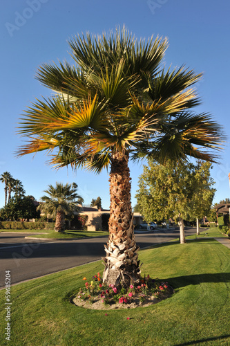 Single palm tree next to road with grass