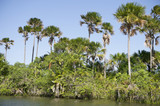 Remote Brazilian River Palm Tree Jungle Shore
