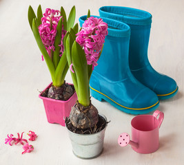 Spring still life with hyacinths and watering