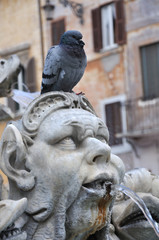 Pigeon at fountain