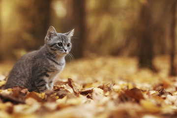 kitten in yellow leaves