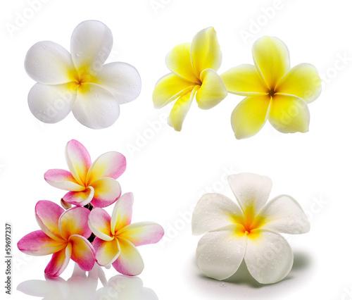 Tuinposter Frangipani Tropical flowers frangipani (plumeria) isolated on white backgro