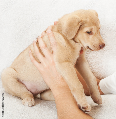 man holding a puppy