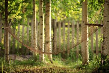 hammock between birches