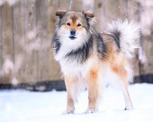 funny dog in winter