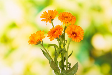 Calendula flowers on green background