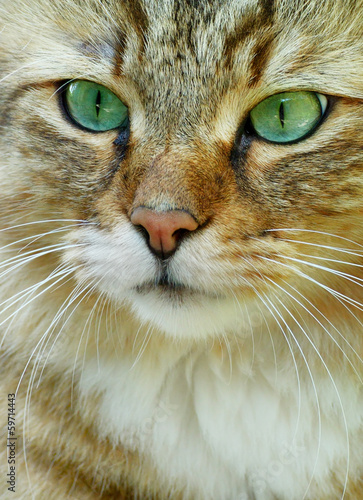Portrait of a cat close-up