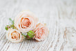 Obrazy na płótnie, fototapety, zdjęcia, fotoobrazy drukowane : Light Pink roses