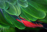 Green Parrot Feathers from the Amazon