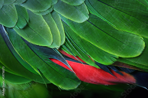 Poster Papegaai Green Parrot Feathers from the Amazon