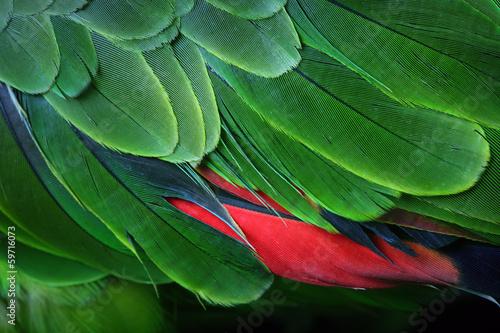 Keuken foto achterwand Papegaai Green Parrot Feathers from the Amazon