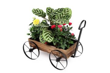 Pflanzenkarre