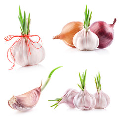 Collections of sprout garlic isolated on white