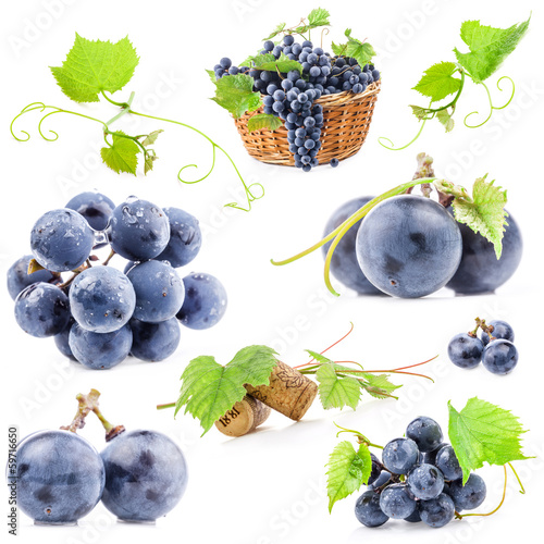 Collection of Dark grapes, Isolated on white