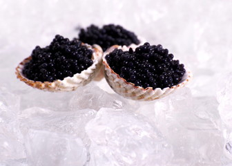 Three shell with black caviar on ice, close up
