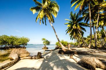 Karibik pur: karibischer Traumstrand