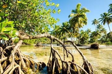 Karibik pur: Mangroven an Karibischem Strand