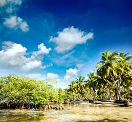 Karibik pur: Traumstrand mit Mangroven und Palmen