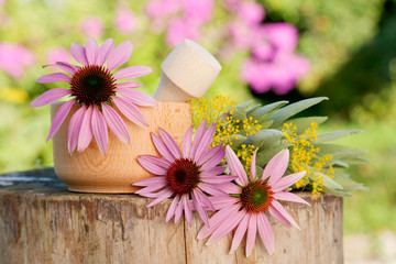 mortar with  coneflower and healing herbs, herbal medicine