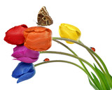 Colorful dewy tulips with butterfly and ladybugs