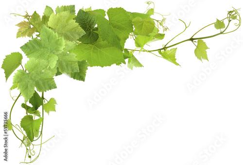Fotobehang Planten feuilles de vigne