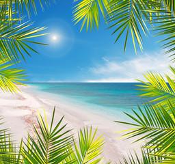 palm frame in a tropical beach