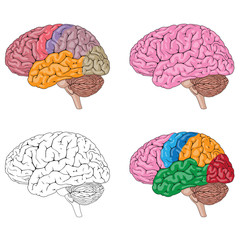 Human Brain Mix